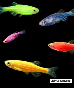 Các loại cá sọc ngựa