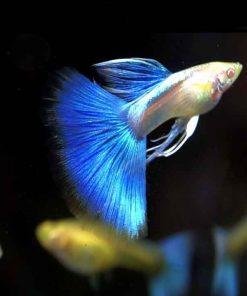 Blue Topaz Ribbon