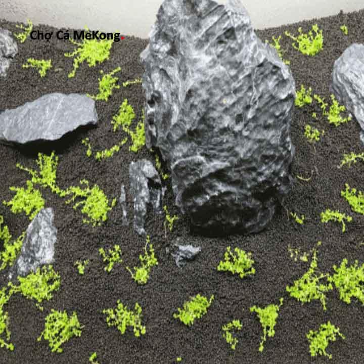 Cách trồng Trân Châu Ngọc Trai